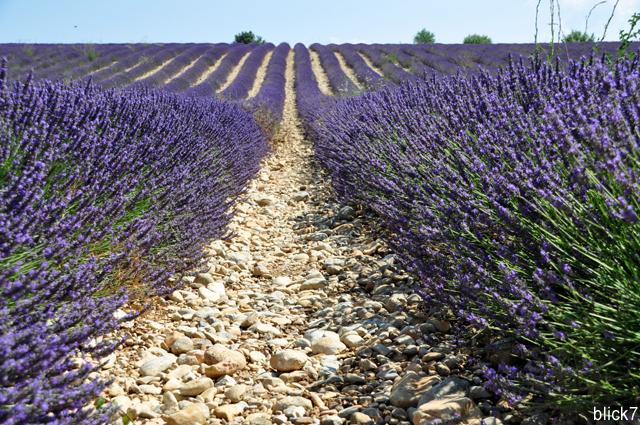 Lavendelfelder in der provence fernwehfreitag blick7 for Lavendelfelder provence