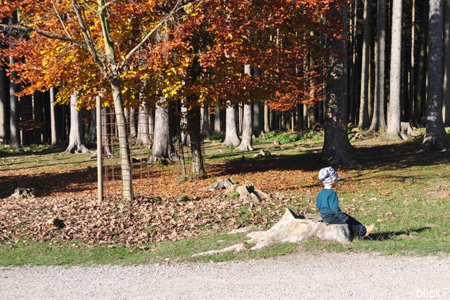 kleine Pause auf dem Baumstamm