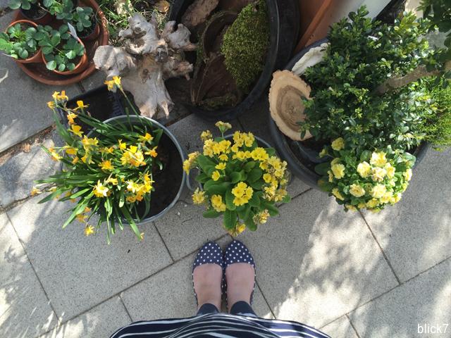 Narzissen, gelbe Blumen und Erdbeeren auf der Terrasse