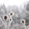 Winterliebe [wenn der Nebel über Nacht friert]